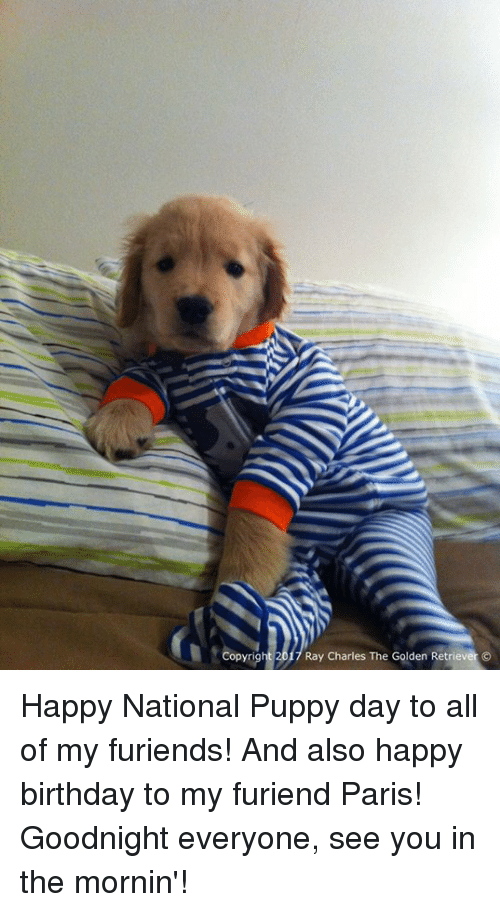 Memes, 🤖, and Rays: Copyrig  o  Ray Charles The Golden Retriever Happy National Puppy day to all of my furiends! And also happy birthday to my furiend Paris! Goodnight everyone, see you in the mornin'!