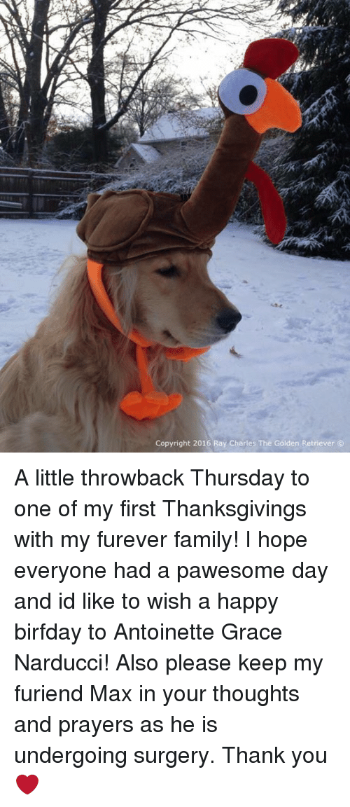 Birfday: Copyright 2016 Ray Charles The Golden Retriever A little throwback Thursday to one of my first Thanksgivings with my furever family! I hope everyone had a pawesome day and id like to wish a happy birfday to Antoinette Grace Narducci! Also please keep my furiend Max in your thoughts and prayers as he is undergoing surgery. Thank you❤️