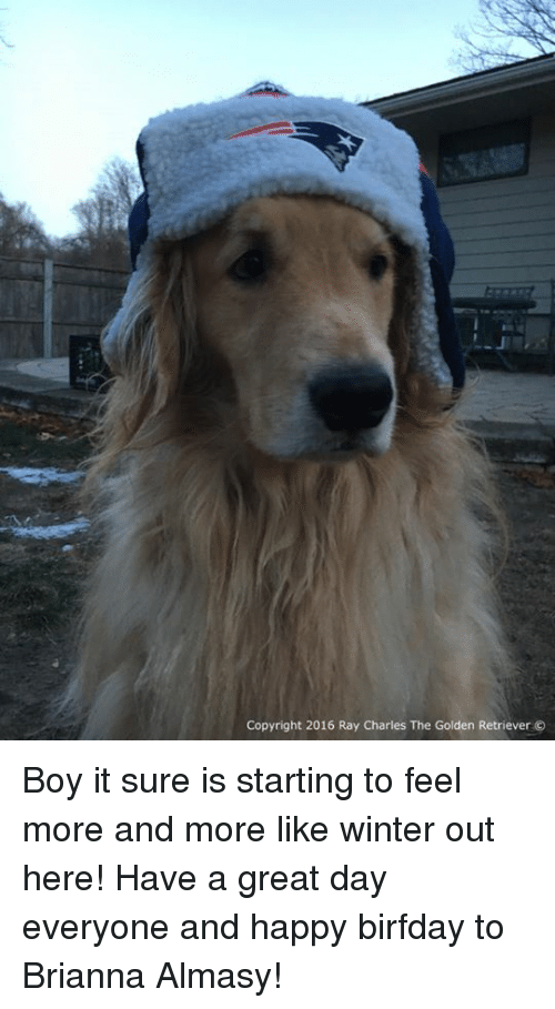 Birfday: Copyright 2016 Ray Charles The Golden Retriever Boy it sure is starting to feel more and more like winter out here! Have a great day everyone and happy birfday to Brianna Almasy!