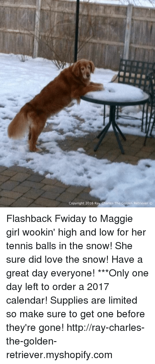 Memes, Calendar, and Golden Retriever: Copyright 2016 Ray Charles The Golden Retriever Flashback Fwiday to Maggie girl wookin' high and low for her tennis balls in the snow! She sure did love the snow! Have a great day everyone!  ***Only one day left to order a 2017 calendar! Supplies are limited so make sure to get one before they're gone!  http://ray-charles-the-golden-retriever.myshopify.com