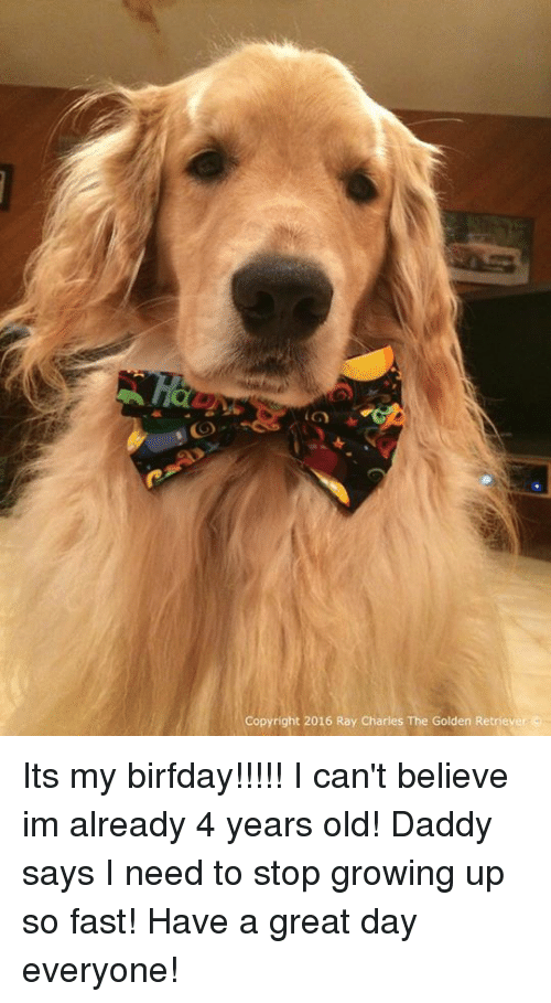 Birfday: Copyright 2016 Ray Charles The Golden Retriever Its my birfday!!!!! I can't believe im already 4 years old! Daddy says I need to stop growing up so fast! Have a great day everyone!