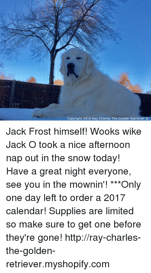 Memes, Calendar, and Golden Retriever: Copyright 2016 Ray Charles The Golden Retriever Jack Frost himself! Wooks wike Jack O took a nice afternoon nap out in the snow today! Have a great night everyone, see you in the mownin'!  ***Only one day left to order a 2017 calendar! Supplies are limited so make sure to get one before they're gone!  http://ray-charles-the-golden-retriever.myshopify.com