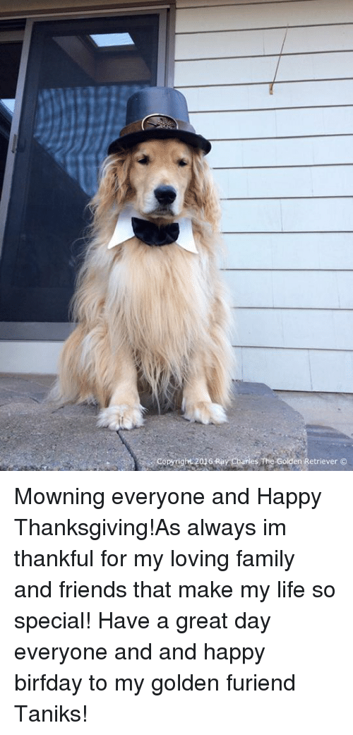 Birfday: Copyright 2016 Ray Charles The Golden Retriever Mowning everyone and Happy Thanksgiving!As always im thankful for my loving family and friends that make my life so special! Have a great day everyone and and happy birfday to my golden furiend Taniks!