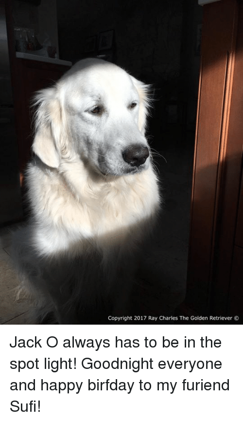 Birfday: Copyright 2017 Ray Charles The Golden Retriever Jack O always has to be in the spot light! Goodnight everyone and happy birfday to my furiend Sufi!