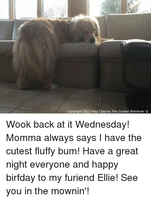Birfday: Copyright 2017 Ray Charles The Golden Retriever Wook back at it Wednesday! Momma always says I have the cutest fluffy bum! Have a great night everyone and happy birfday to my furiend Ellie! See you in the mownin'!