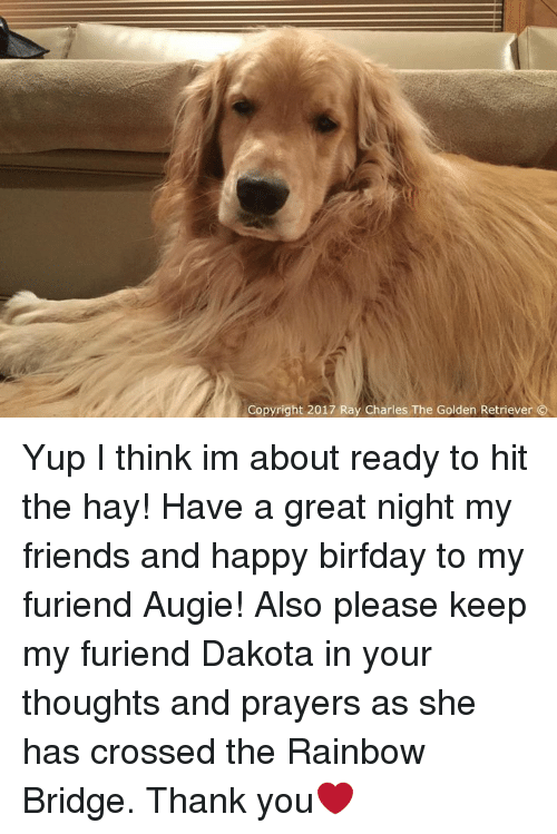 Birfday: Copyright 2017 Ray Charles The Golden Retriever Yup I think im about ready to hit the hay! Have a great night my friends and happy birfday to my furiend Augie! Also please keep my furiend Dakota in your thoughts and prayers as she has crossed the Rainbow Bridge. Thank you❤