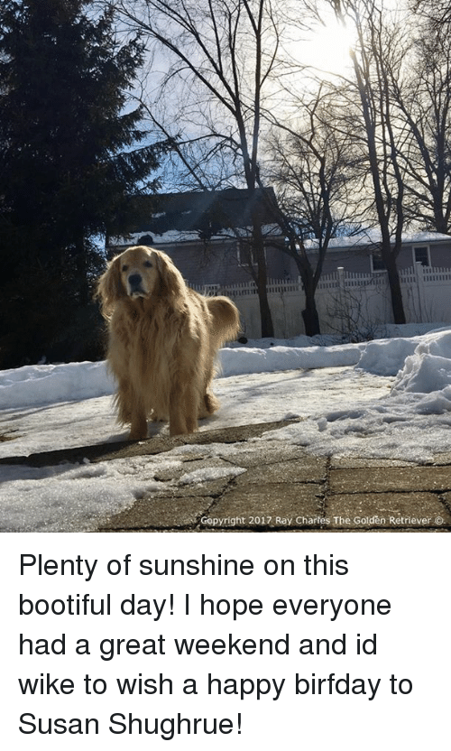 Birfday: Copyright 2017 Ray Chartes The Golden Retriever O. Plenty of sunshine on this bootiful day! I hope everyone had a great weekend and id wike to wish a happy birfday to Susan Shughrue!