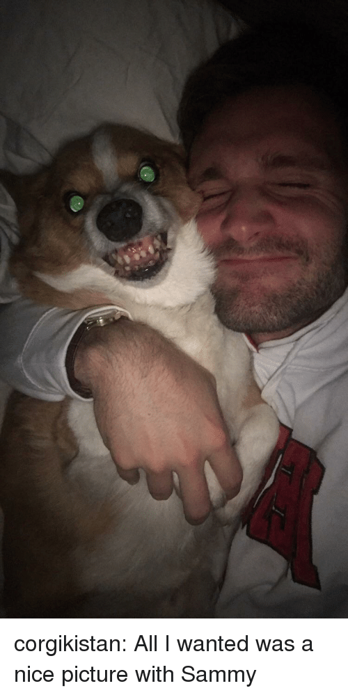 sammy: corgikistan:  All I wanted was a nice picture with Sammy