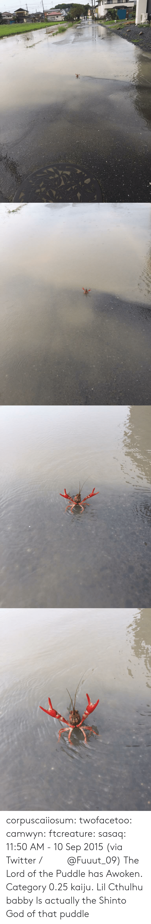 Cthulhu: corpuscaiiosum: twofacetoo:   camwyn:  ftcreature:  sasaq:  11:50 AM - 10 Sep 2015 (via Twitter / ふ み な @Fuuut_09)   The Lord of the Puddle has Awoken.  Category 0.25 kaiju.  Lil Cthulhu babby   Is actually the Shinto God of that puddle