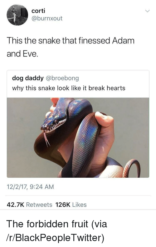 Finessed: corti  @burnxout  This the snake that finessed Adam  and Eve.  dog daddy @broebong  why this snake look like it break hearts  12/2/17, 9:24 AM  42.7K Retweets 126K Likes <p>The forbidden fruit (via /r/BlackPeopleTwitter)</p>