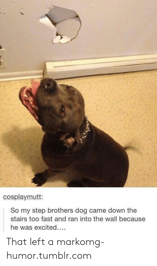 Step Brothers: cosplaymutt:  So my step brothers dog came down the  stairs too fast and ran into the wall because  he was excited... That left a markomg-humor.tumblr.com