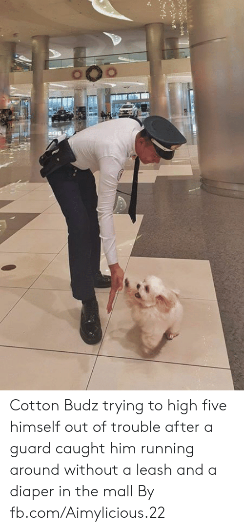 Running Around: Cotton Budz trying to high five himself out of trouble after a guard caught him running around without a leash and a diaper in the mall  By fb.com/Aimylicious.22