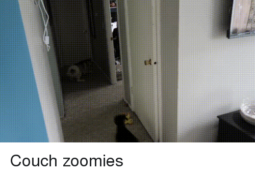 Zoomies and Couch: Couch zoomies