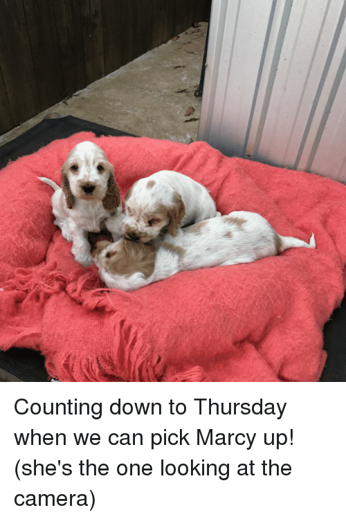 Camera, Her, and Sisters: Counting down to Thursday when we can pick Marcy up! (she's the one looking at the camera)
