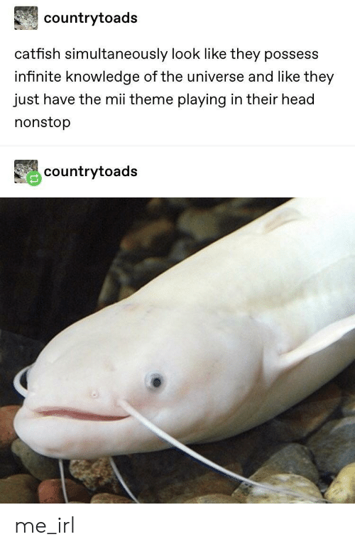 possess: countrytoads  catfish simultaneously look like they possess  infinite knowledge of the universe and like they  just have the mii theme playing in their head  nonstop  countrytoads me_irl