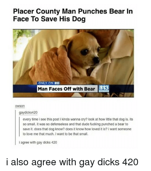 Funny: County Man Punches Bear In  Face To Save His Dog  ONLY ON 113  Man Faces Off with Bear  OWSon  gay dicks 420  every time isee this postikinda wanna cry? look at how ittle that dog is. its  so small. it was so defenseless and that dude fucking punched a bear to  save it does that dog know? does it know how loved it is? i want someone  to love me that much, i want to be that small.  agree with gay dicks 420 i also agree with gay dicks 420