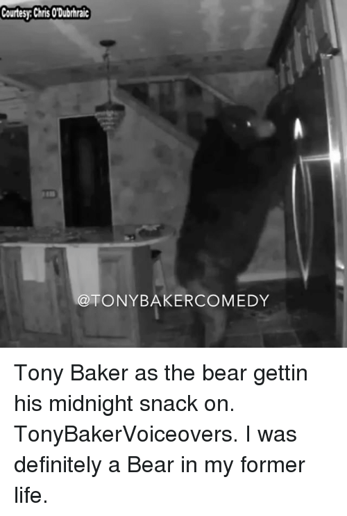 Definitely, Life, and Memes: Courtesy: Chris O'Dubrhraic  @TONYBAKERCOMEDY Tony Baker as the bear gettin his midnight snack on. TonyBakerVoiceovers. I was definitely a Bear in my former life.