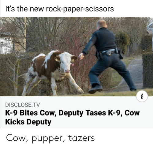 cow: Cow, pupper, tazers