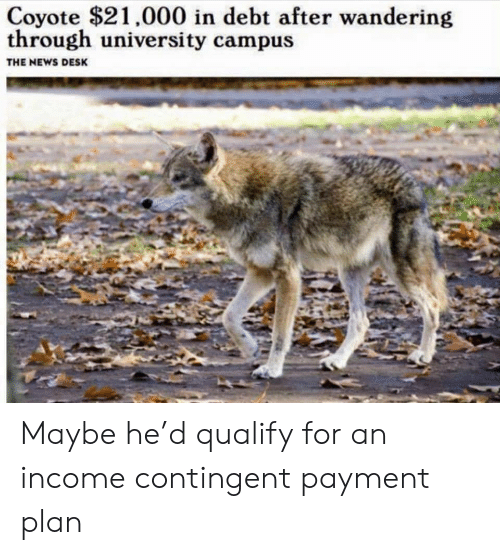 Coyote: Coyote $21,000 in debt after wandering  through university campus  THE NEWS DESK Maybe he'd qualify for an income contingent payment plan