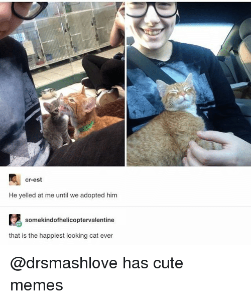 Cute, Funny, and Memes: cr-est  He yelled at me until we adopted him  somekindofhelicoptervalentine  that is the happiest looking cat ever @drsmashlove has cute memes