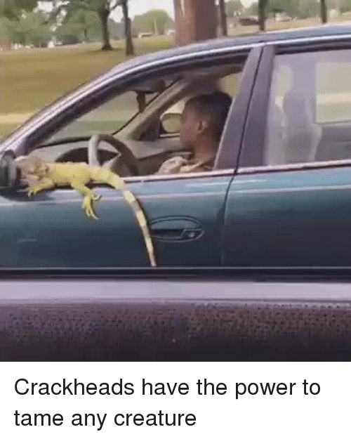 Crackhead, Funny, and Creature: Crackheads have the power to tame any creature