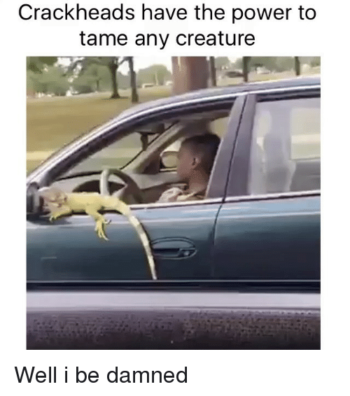 Crackhead, Funny, and Memes: Crackheads have the power to  tame any creature Well i be damned