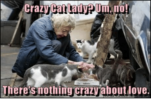 crazy cats: Crazy Cat Lad VPUm, no!  Theres nothing crazy aboutdove