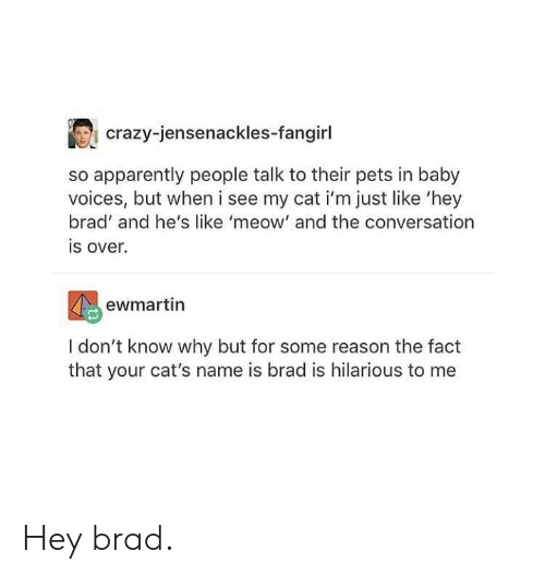 Is Hilarious: crazy-jensenackles-fangirl  so apparently people talk to their pets in baby  voices, but when i see my cat i'm just like 'hey  brad' and he's like 'meow' and the conversation  is over.  ewmartin  I don't know why but for some reason the fact  that your cat's name is brad is hilarious to me Hey brad.