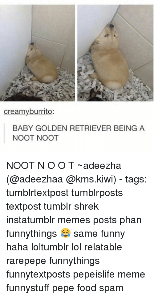 Food, Funny, and Lol: creamy burrito:  BABY GOLDEN RETRIEVER BEING A  NOOT NOOT NOOT N O O T ~adeezha (@adeezhaa @kms.kiwi) - tags: tumblrtextpost tumblrposts textpost tumblr shrek instatumblr memes posts phan funnythings 😂 same funny haha loltumblr lol relatable rarepepe funnythings funnytextposts pepeislife meme funnystuff pepe food spam