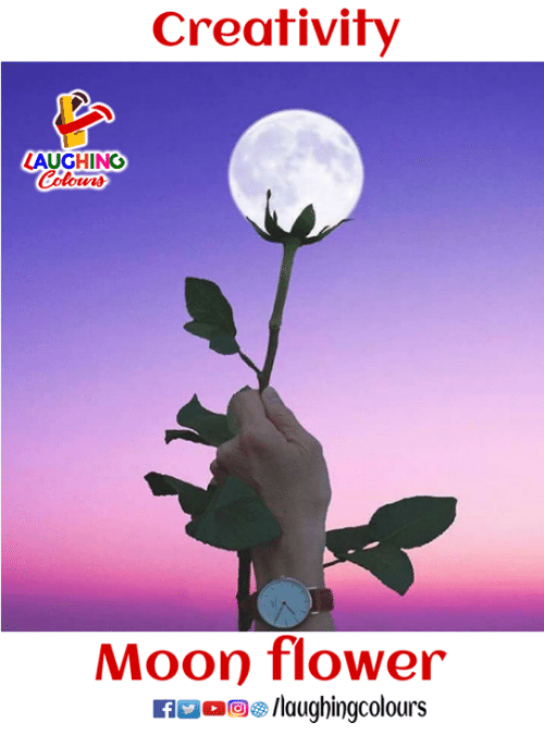 Mooned: Creativity  AUGHING  Moon flower  ig/laughingcolours