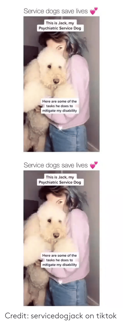 Credit: Credit: servicedogjack on tiktok