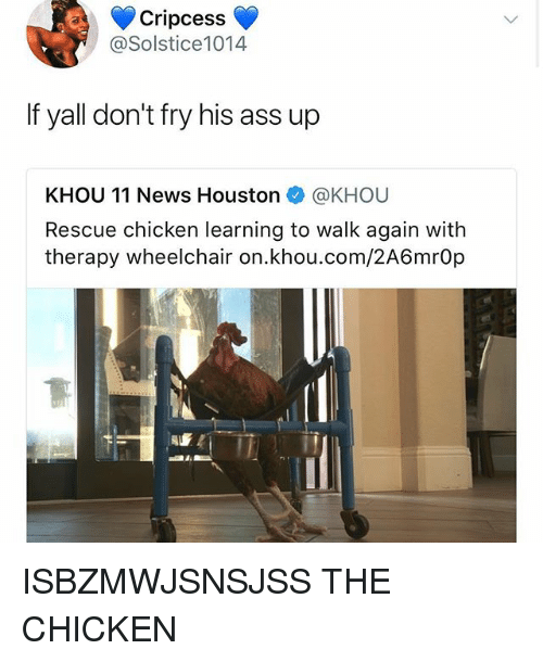 Ass, Memes, and News: Cripcess  @Solstice1014  If yall don't fry his ass up  KHOU 11 News Houston @KHOU  Rescue chicken learning to walk again with  therapy wheelchair on.khou.com/2A6mrOp  al. ISBZMWJSNSJSS THE CHICKEN