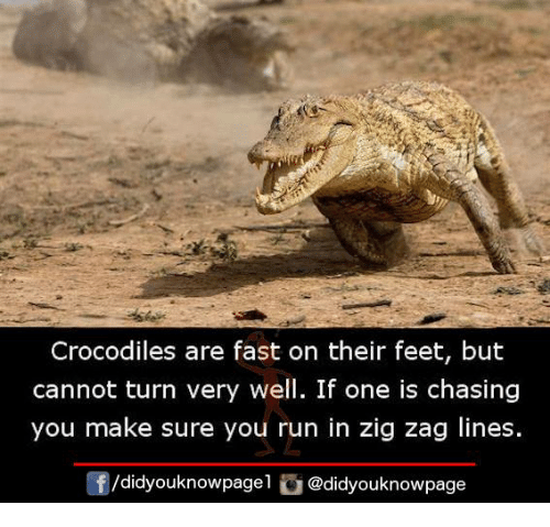 Memes, Run, and 🤖: Crocodiles are fast on their feet, but  cannot turn very well. If one is chasing  you make sure you run in zig zag lines.  /did youknowpagel  @didyouknowpage