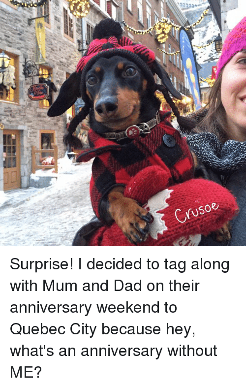 Memes, 🤖, and Quebec: Crusoe Surprise! I decided to tag along with Mum and Dad on their anniversary weekend to Quebec City because hey, what's an anniversary without ME?