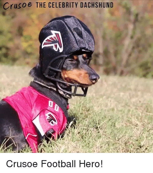 Memes, Heroes, and Celebrated: Crusoe THE CELEBRITY DACHSHUND Crusoe Football Hero!