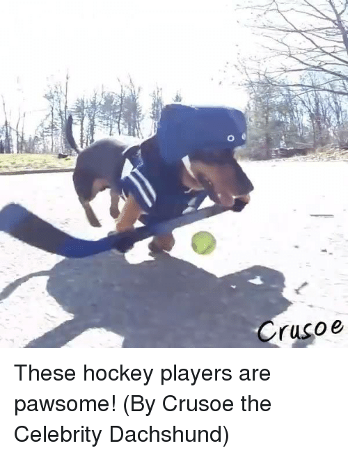 Dank, Hockey, and 🤖: Crusoe These hockey players are pawsome! (By Crusoe the Celebrity Dachshund)
