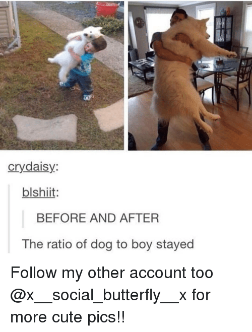 The Ratio: crydaisy:  blshiit  BEFORE AND AFTER  The ratio of dog to boy stayed Follow my other account too @x__social_butterfly__x for more cute pics!!