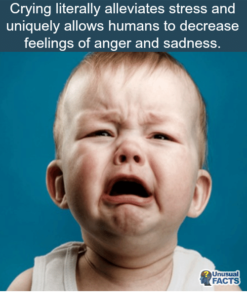 Crying, Facts, and Memes: Crying literally alleviates stress and  uniquely allows humans to decrease  feelings of anger and sadness.  Unusual  FACTS
