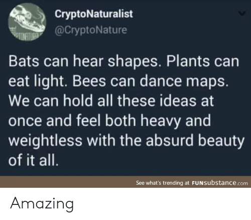 Absurd: CryptoNaturalist  @CryptoNature  Bats can hear shapes. Plants can  eat light. Bees can dance maps.  We can hold all these ideas at  once and feel both heavy and  weightless with the absurd beauty  of it all.  See what's trending at FUNSubstance.com Amazing