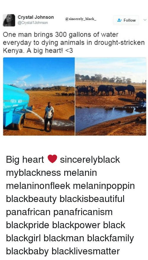 Animals, Black Lives Matter, and Memes: Crystal Johnson  sincerely black  Follow  @Crystal Johnson  One man brings 300 gallons of water  everyday to dying animals in drought-stricken  Kenya. A big heart! <3 Big heart ❤ sincerelyblack myblackness melanin melaninonfleek melaninpoppin blackbeauty blackisbeautiful panafrican panafricanism blackpride blackpower black blackgirl blackman blackfamily blackbaby blacklivesmatter