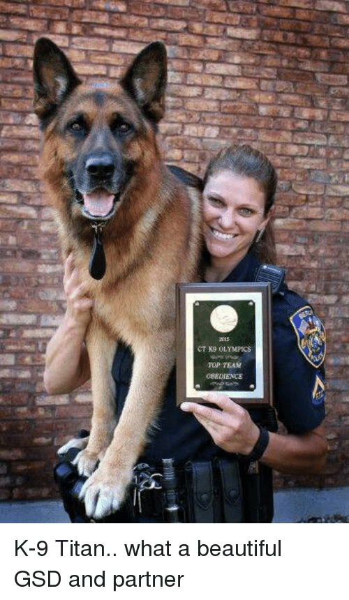 gsd: CTK9 OLYMPICS  TOP TEAM K-9 Titan.. what a beautiful GSD and partner