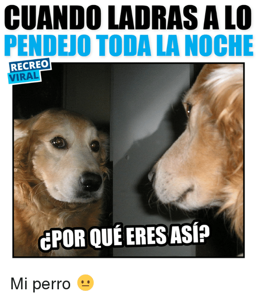 Search Perro Memes On Sizzle