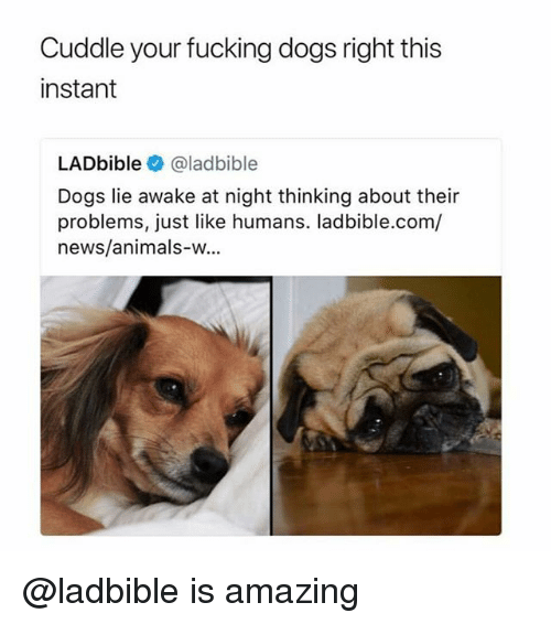 Animals, Dogs, and Fucking: Cuddle your fucking dogs right this  instant  LADbible @ladbible  Dogs lie awake at night thinking about their  problems, just like humans. ladbible.com/  news/animals-w... @ladbible is amazing