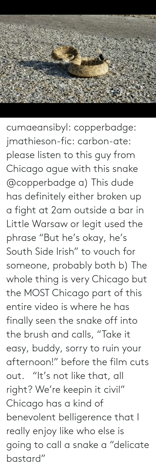 "like that: cumaeansibyl: copperbadge:  jmathieson-fic:  carbon-ate: please listen to this guy from Chicago ague with this snake @copperbadge  a) This dude has definitely either broken up a fight at 2am outside a bar in Little Warsaw or legit used the phrase ""But he's okay, he's South Side Irish"" to vouch for someone, probably both b) The whole thing is very Chicago but the MOST Chicago part of this entire video is where he has finally seen the snake off into the brush and calls, ""Take it easy, buddy, sorry to ruin your afternoon!"" before the film cuts out.    ""It's not like that, all right? We're keepin it civil"" Chicago has a kind of benevolent belligerence that I really enjoy like who else is going to call a snake a ""delicate bastard"""