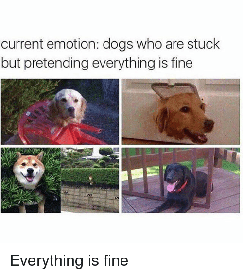 Dogs, Funny, and Who: current emotion: dogs who are stuck  but pretending everything is fine Everything is fine