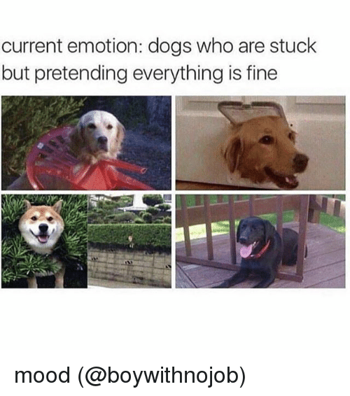 Dogs, Memes, and Mood: current emotion: dogs who are stuck  but pretending everything is fine mood (@boywithnojob)