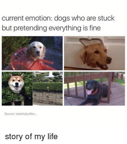 Relatable, Pretenders, and Story of My Life: current emotion: dogs who are stuck  but pretending everything is fine  Source: tastefullyoffen... story of my life