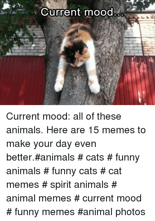 Current Mood: Current mood Current mood: all of these animals. Here are 15 memes to make your day even better.#animals # cats # funny animals # funny cats # cat memes # spirit animals # animal memes # current mood # funny memes #animal photos