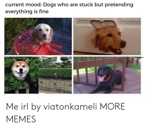Current Mood: current mood: Dogs who are stuck but pretending  everything is fine Me irl by viatonkameli MORE MEMES