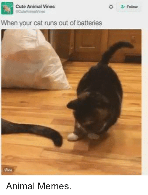 Animation Meme: Cute Animal Vines  When your cat runs out of batteries Animal Memes.